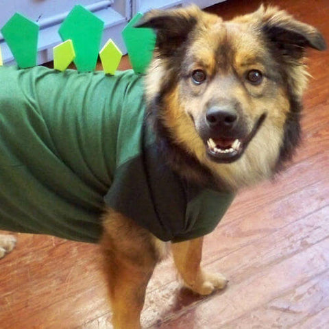 An undeniably good doggo wearing a dinosaur outfit made using a dog t-shirt. (Source)