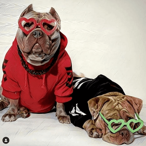 These American Bullies look like they're livin' the bully life as they chill out wearing the WOOF Dog Hoodie in red and black along with quirky heart-shaped glasses.