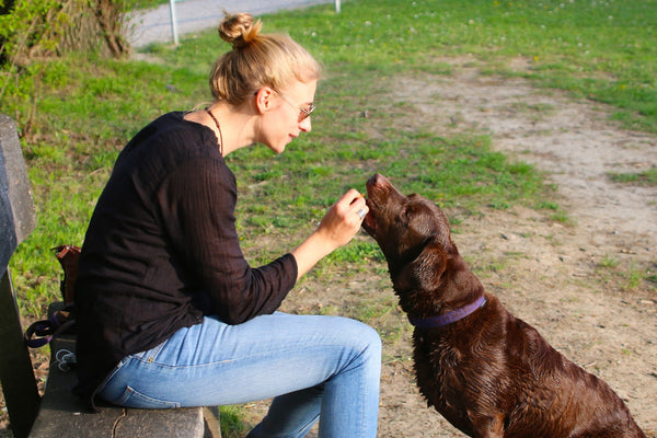 A woman rewards her Labrador Retriever for good behavior