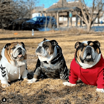Adrian, Otis, and Angus enjoying each other's company while wearing their own Spark Paws dog hoodies.