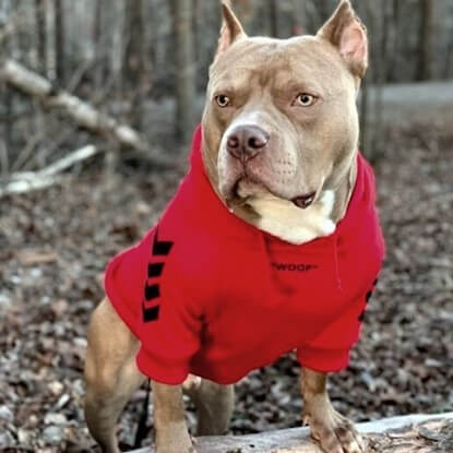 Kobe Bean of @bigheaddynasty_ out in the woods wearing the Spark Paws WOOF Dog Hoodie in red.