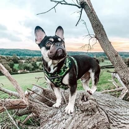 @sunny.french enjoying the great outdoors in Spark Paws Green Shark Camo Walk Set.