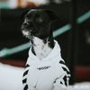 icon dogwear streetwear for dogs, off white dog clothes, woof white, dog clothes