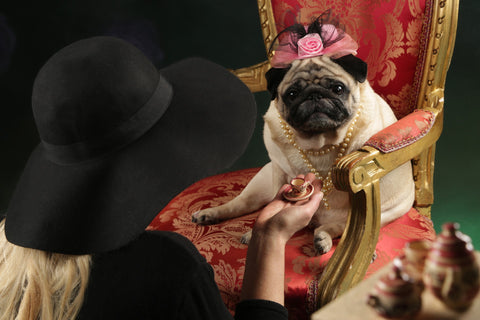 pugs are royalty