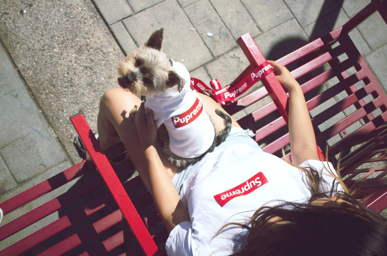 supreme dog clothes