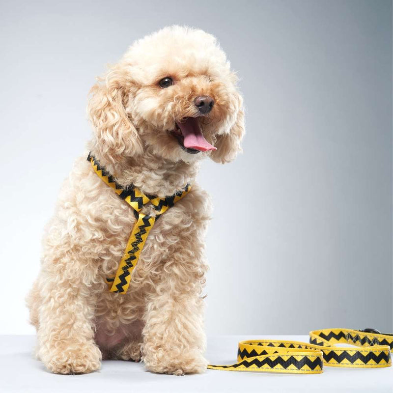 Charlie Brown Dog Leash for Poodles