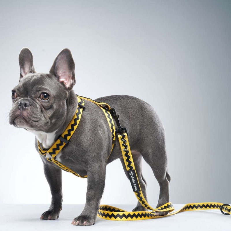 Charlie Brown Dog Leash for French Bulldog