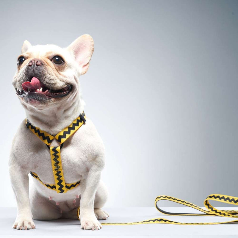 Charlie Brown Dog Leash for Frenchies