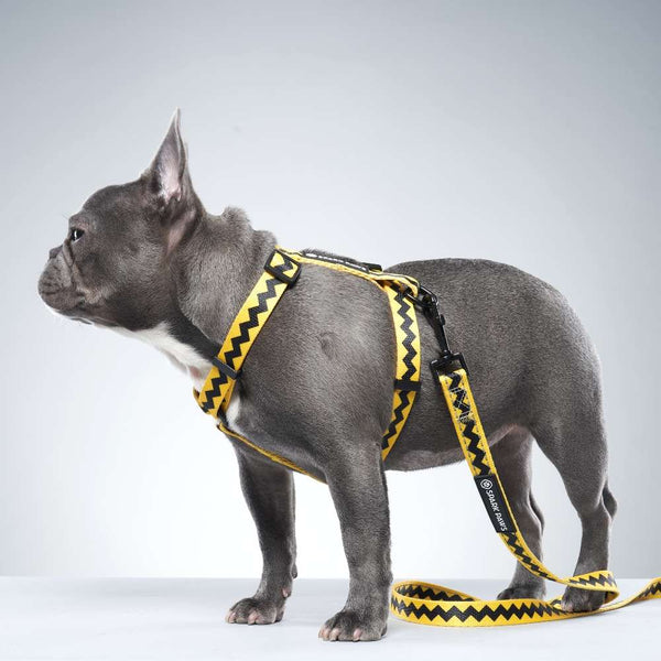 Charlie Brown Strap Dog Harness French Bulldogs