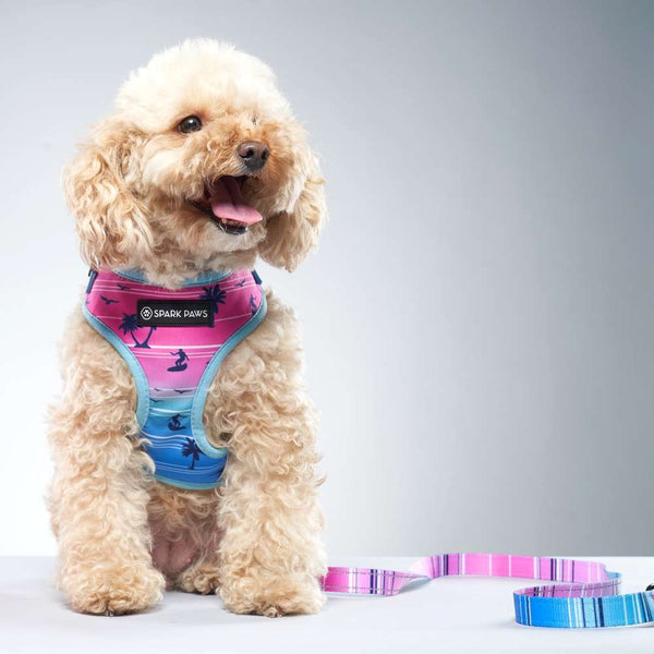 Miami Vice Poodle Dog Leash and Harness