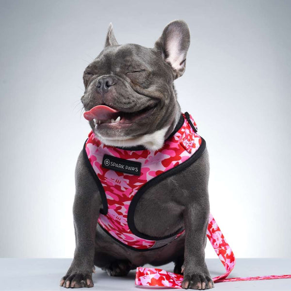 Pink Camo Shark Monster Frenchie Bulldog Leash and Harness