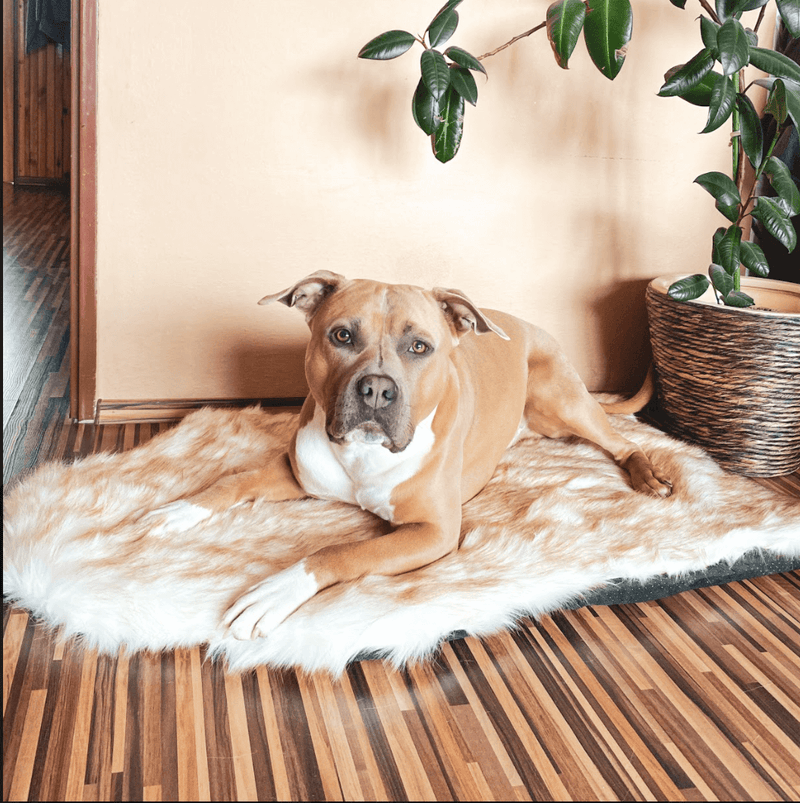 Faux Fur Memory Foam Rug Dog Bed