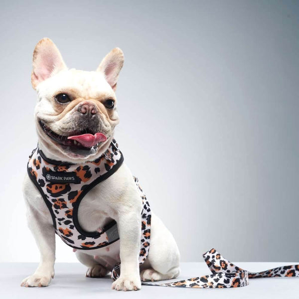 Wild Leopard Frenchie Dog Leash and Harness