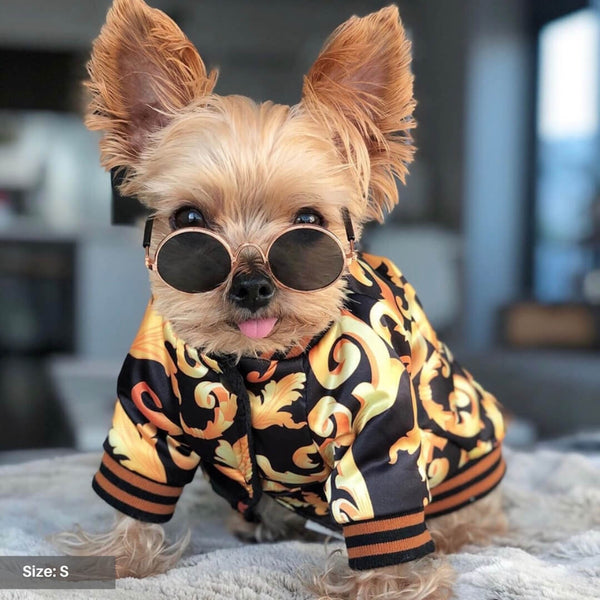 puppy bomber jacket
