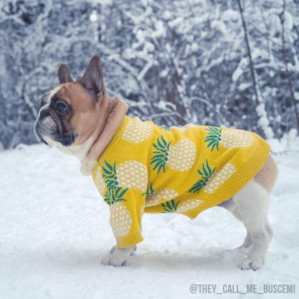 Pineapple Dog Sweater, cute frenchie sweater, sweater for frenchies, cute dog sweater, small dog sweater, icon dogwear, wool dog sweater