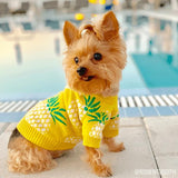 pineapple sweater icondogwear small dog clothes yorkie clothes
