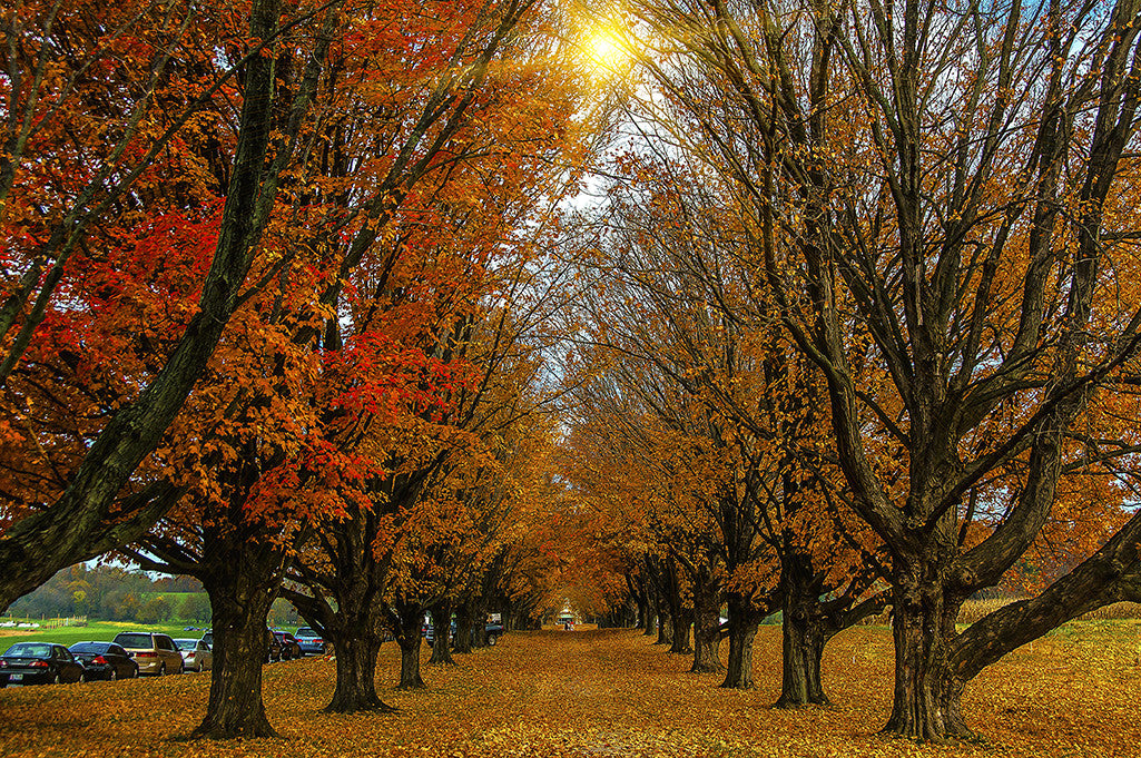 A colorful row of trees shows vibrant Fall foliage.