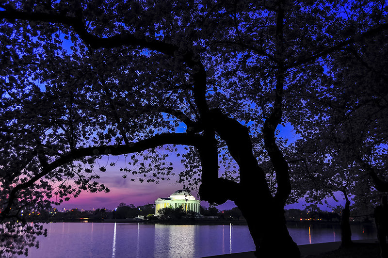 The Jefferson Memorial as seen across the tidal basin at dawn.