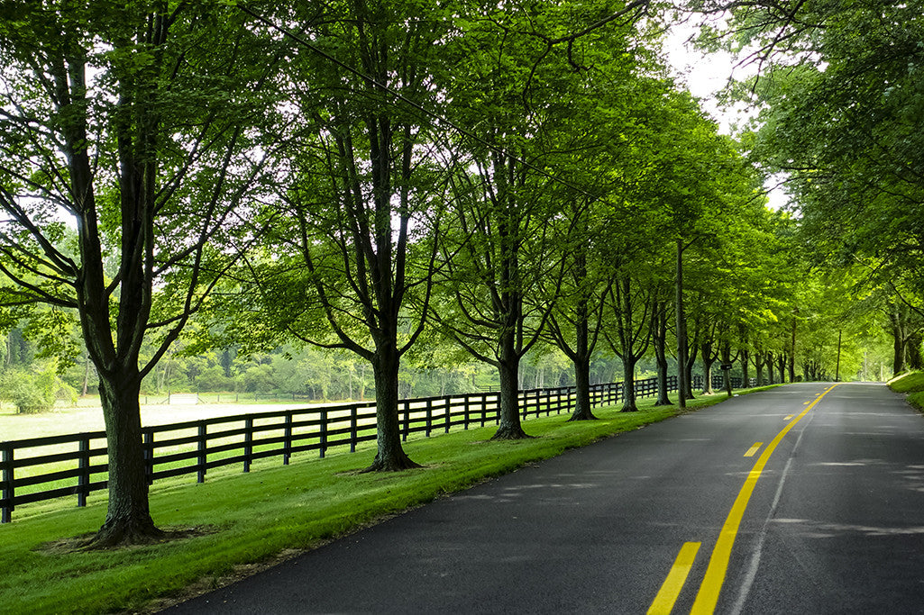 A tree-lined country road in Baltimore County.