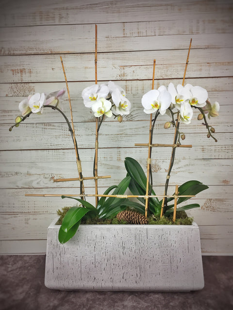 Orchid arrangement-3