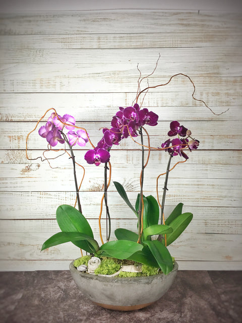 Orchid arrangement-2