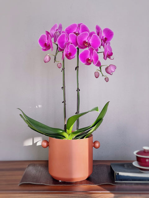 Orchid Arrangement - 4