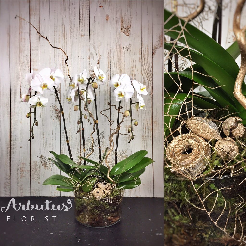 Orchid arrangement-1