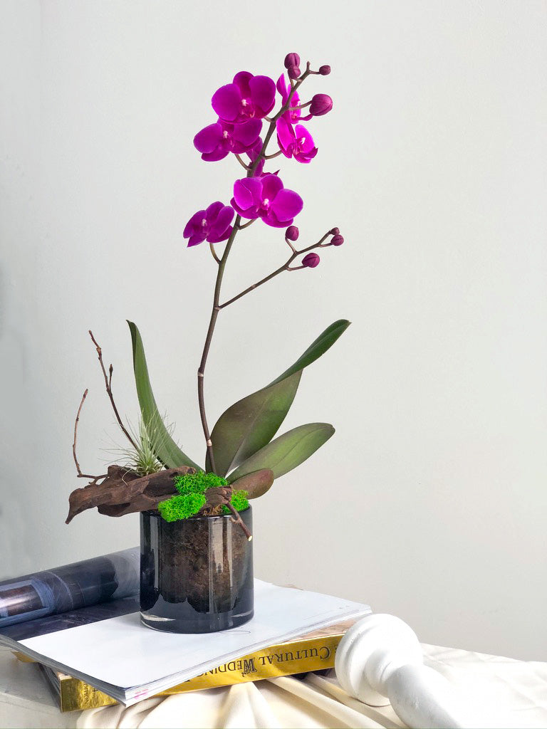 mini orchid arrangement