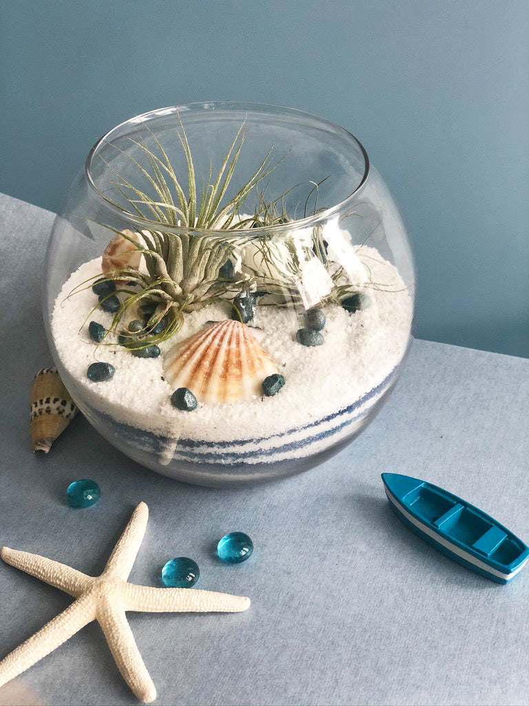 Air Plants Bowl