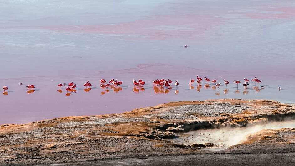 flamingoes on a lake in Bolivia