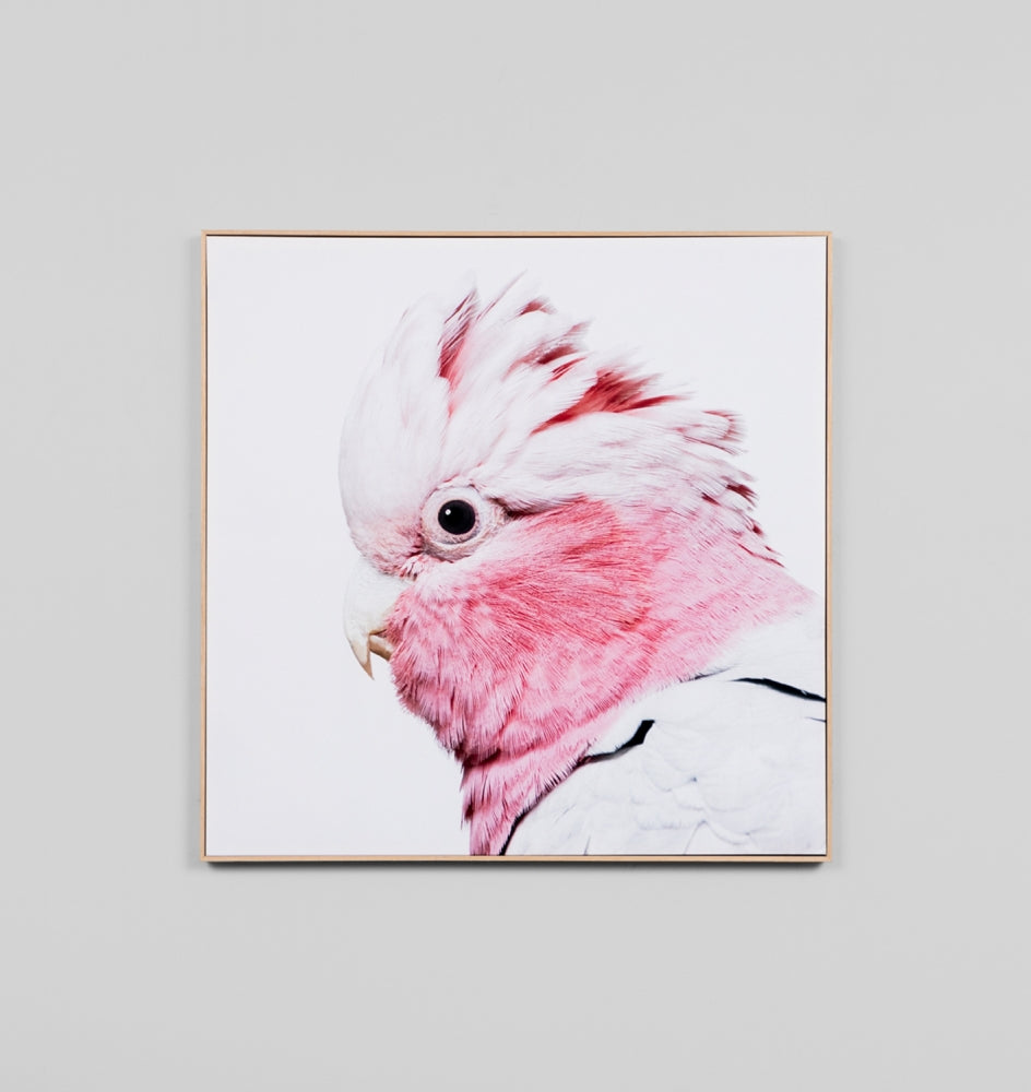 Rose Galah Canvas Print