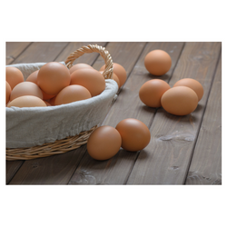 Month-to-month Egg Pickup at 158 E. Bell Court