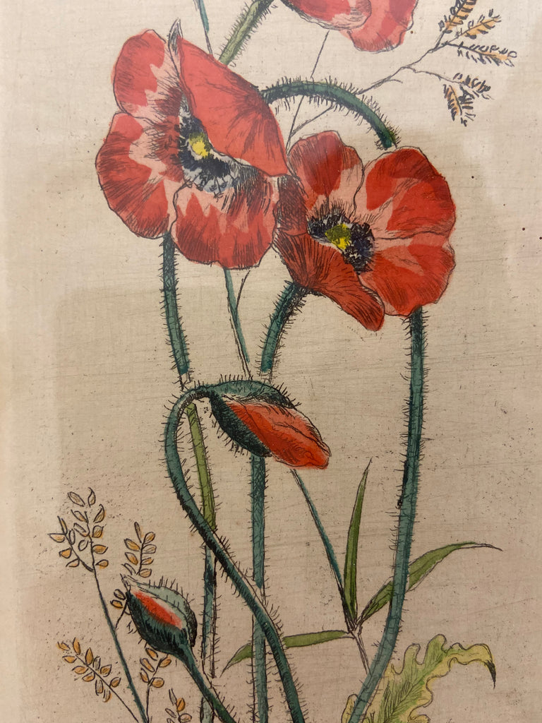 Hand-Colored Rendering of Poppies
