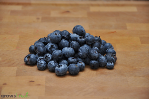 Organic Blueberries - Australian