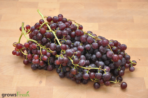 Organic Grapes - Red - Seedless - Australian