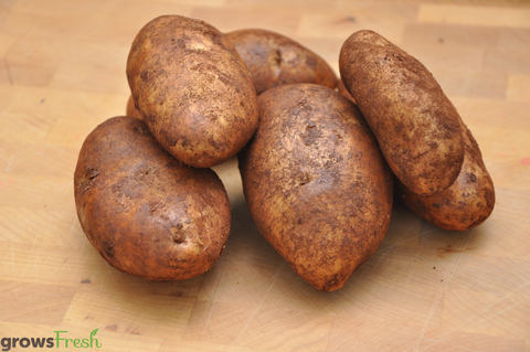 Organic Potatoes - unwashed - Australian