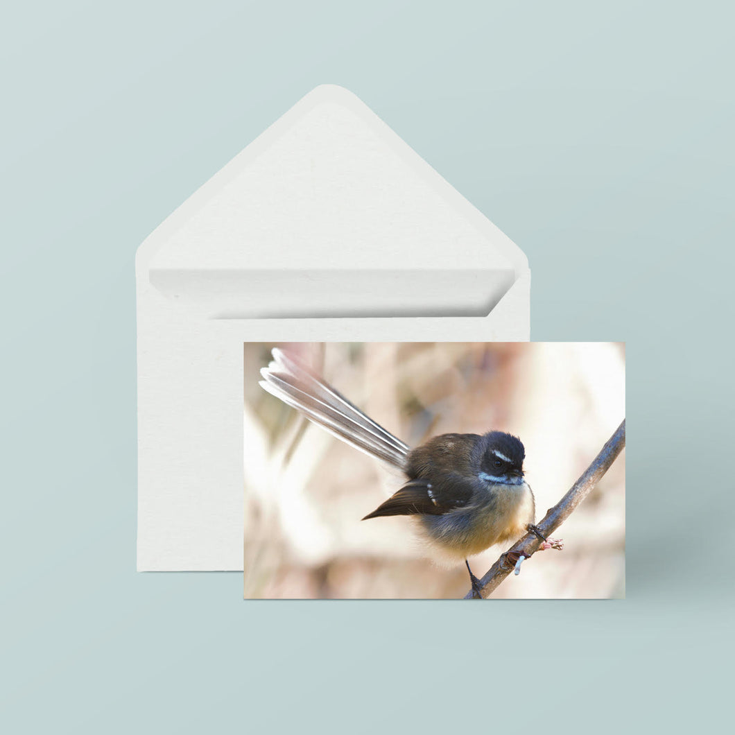 Greeting Cards: Set Two Birds