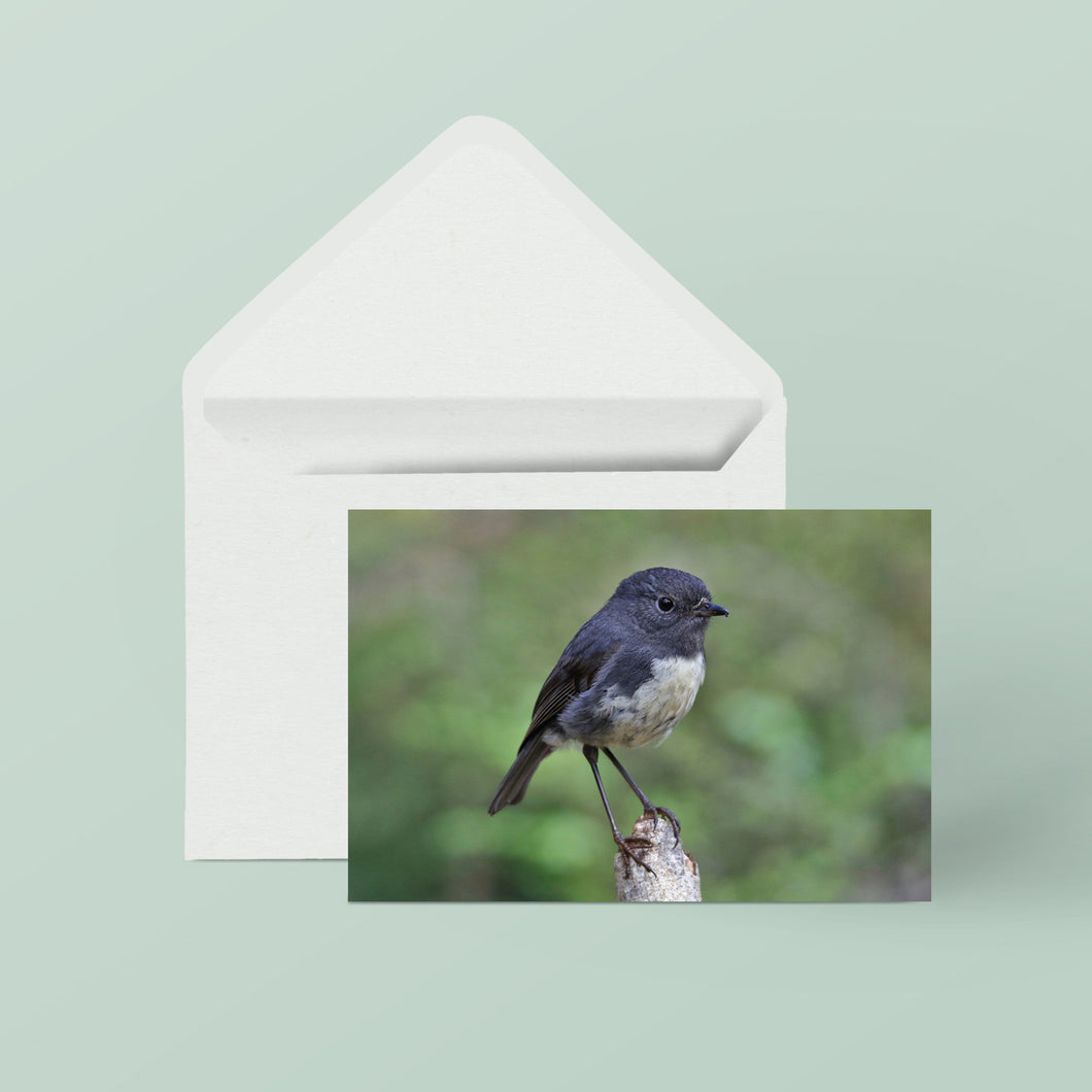 Greeting Cards: Set One Birds