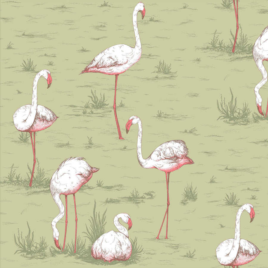 Flamingos Tapet, moss/coral. Cole & Son