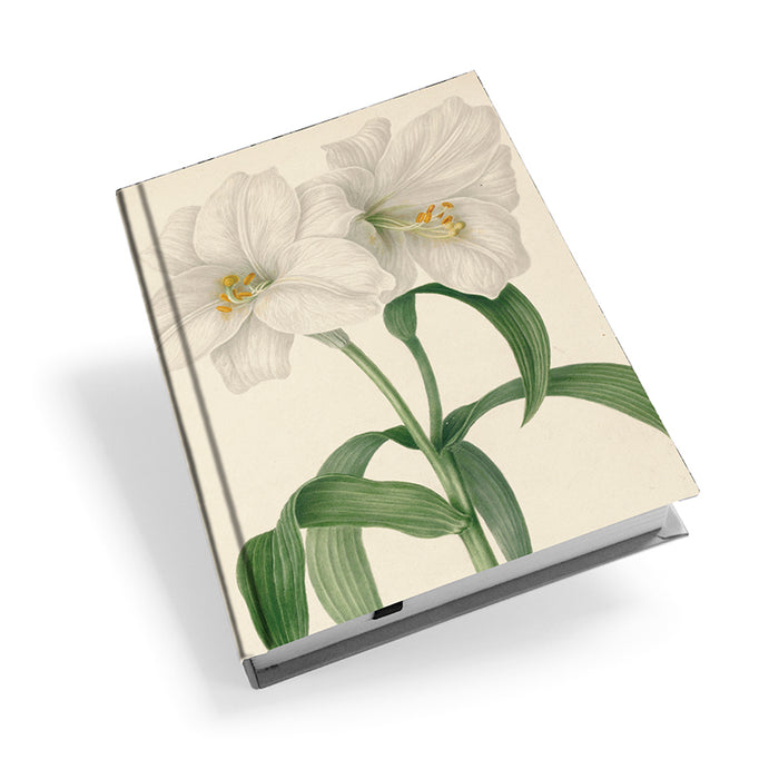 Lilium - Hardback Journal<br>(Pack of 5)