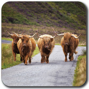 Highland Cattle Coaster<br>(Pack of 10)