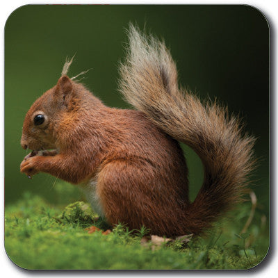 Squirrel Coaster<br>(Pack of 10)
