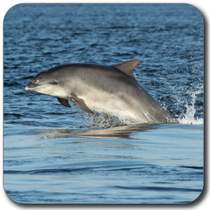 Dolphin Coaster<br>(Pack of 10)