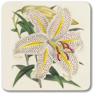 Golden-Rayed Lily of Japan - Potstand<br>(Pack of 5)