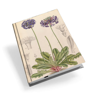 Himalayan Primulas - Hardback Journal<br>(Pack of 5)