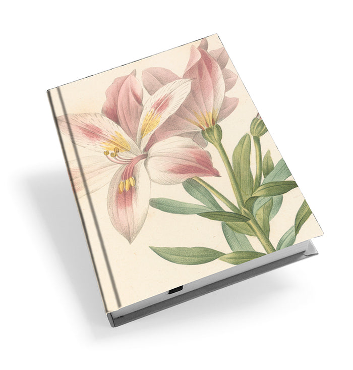 Peruvian Lily - Hardback Journal<br>(Pack of 5)