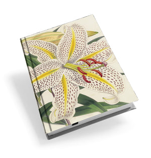 Golden-Rayed Lily of Japan - Hardback Journal<br>(Pack of 5)