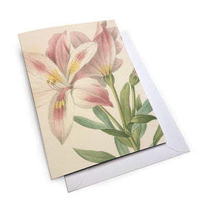 Mixed Lilies - Notecard Set (Pack of 5)
