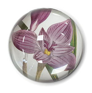 Crocus Banaticus Paperweight<br>(Pack of 5)