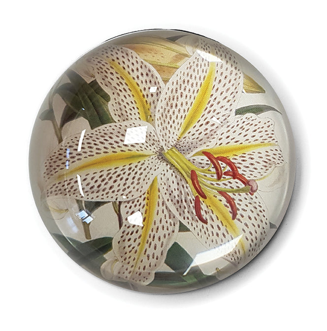 Golden-Rayed Lily of Japan Paperweight<br>(Pack of 5)